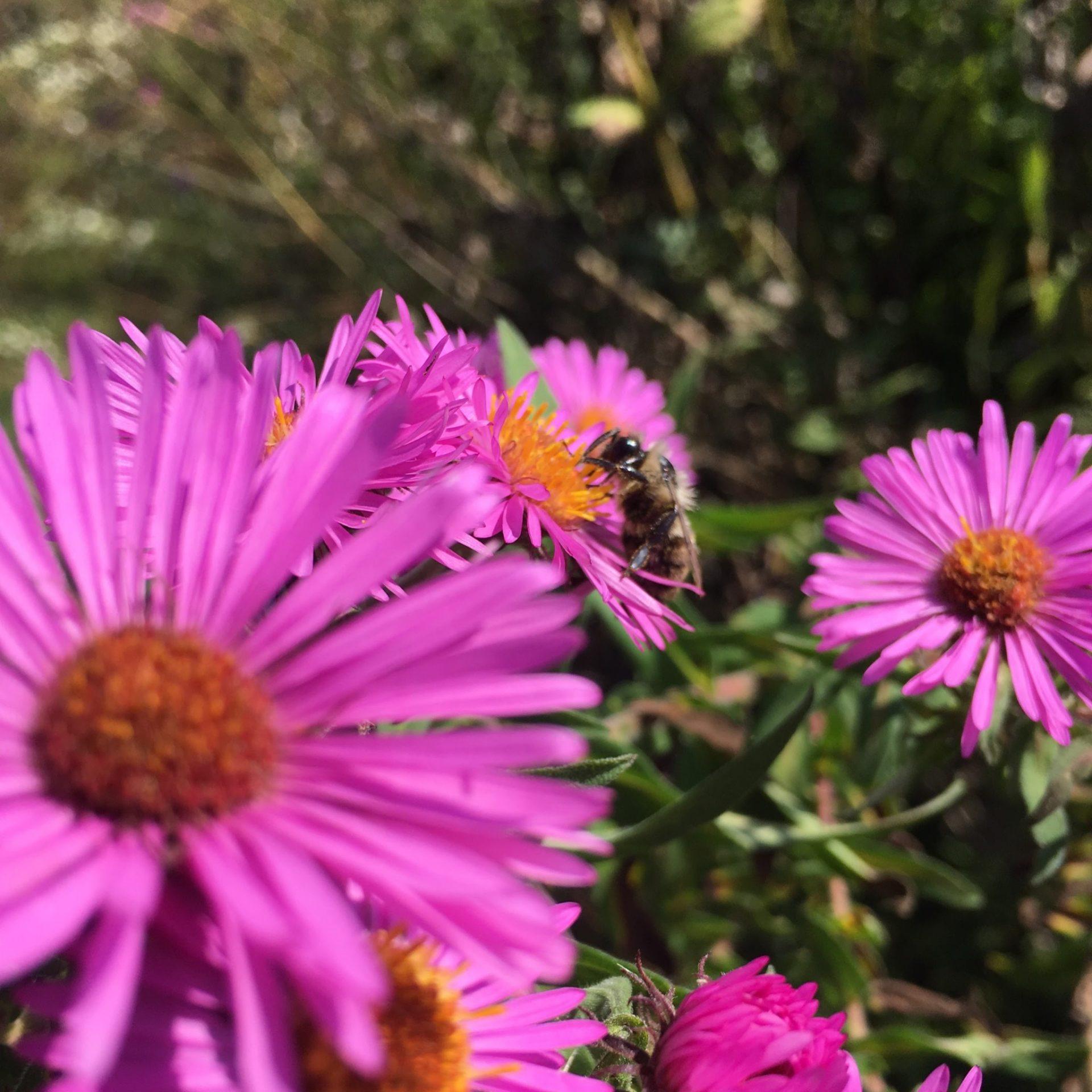 bee landing pad