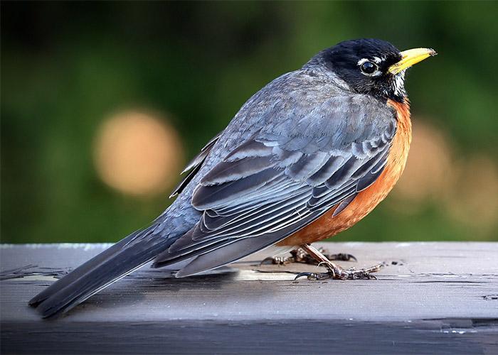 Observe Birds