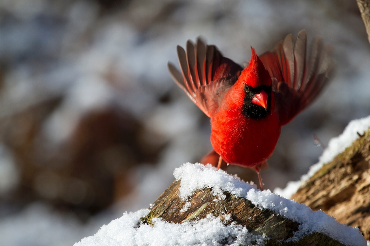 february 2016 nature net news the backyard bird count nature net
