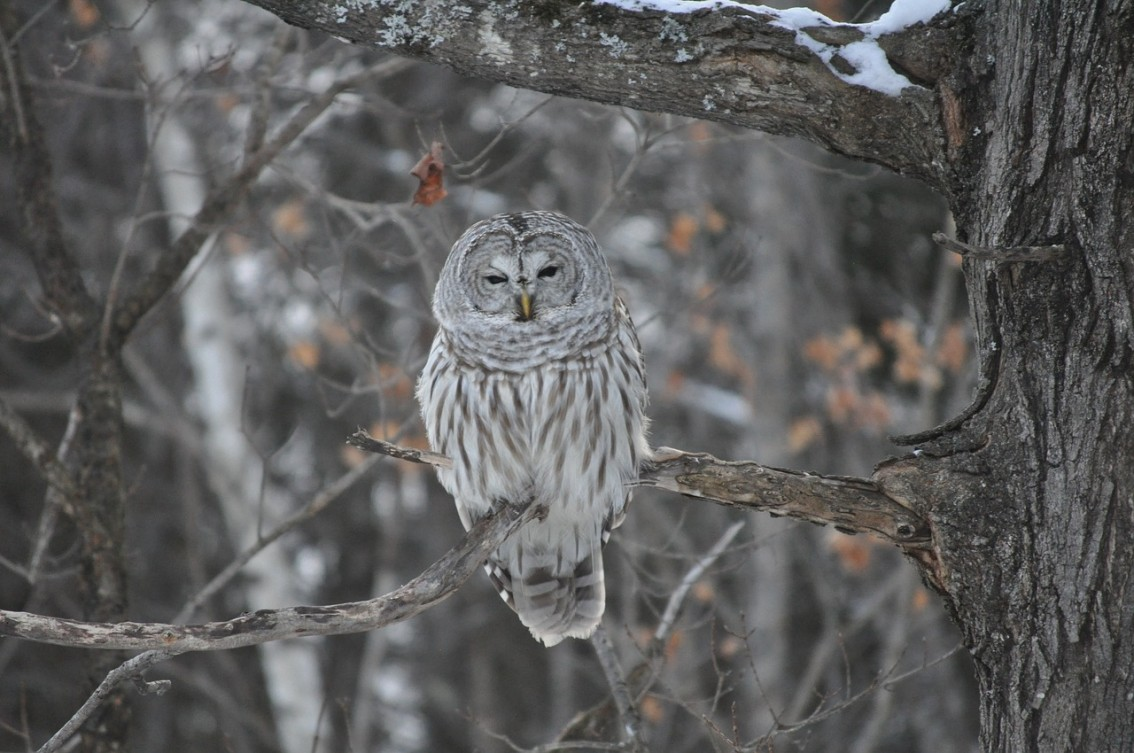 We Used To Teach Students About The Silent Flight Of Owls By Swinging Blocks Wood Were Attached A Rope One Was Covered In Carpeting And